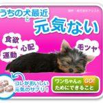 犬健康食ワンプレミアムの効果の感想と口コミ評判(ドッグフード)